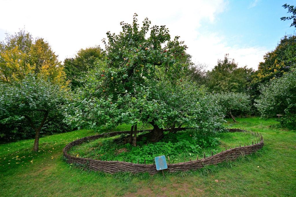 Newton's Apple Tree, Woolsthorpe Manor | Martin Pettitt Flickr