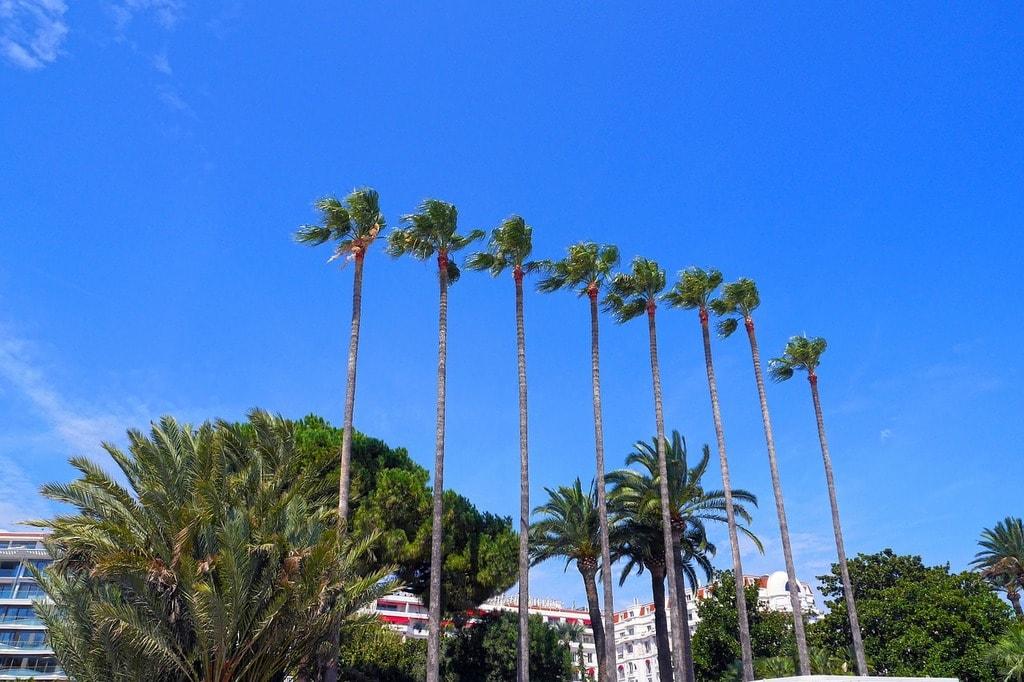 https://pixabay.com/en/palm-tree-sunshine-cannes-444762/