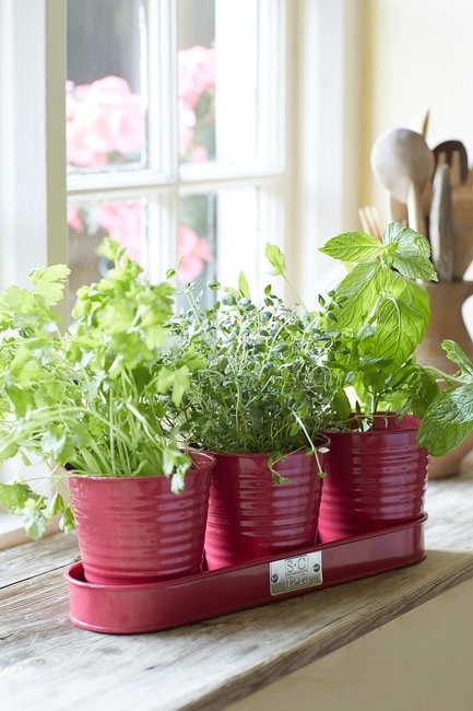 Raspberry Herb Pots lifestyle
