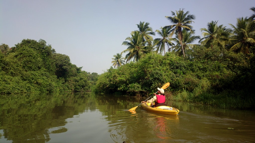 Salbackwaters