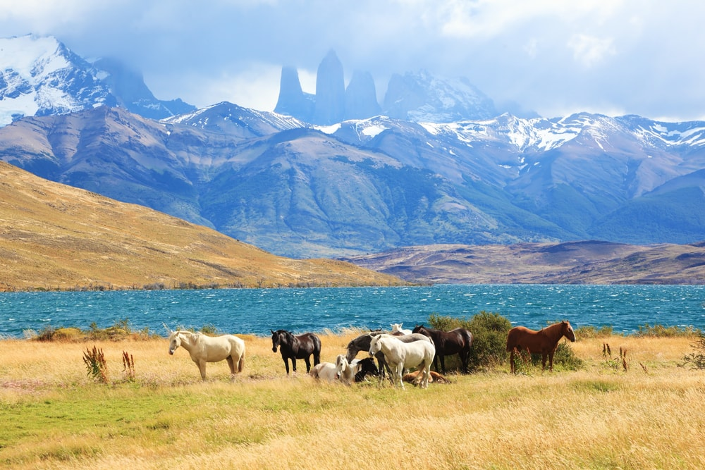 Torres del Paine National Park, South American Andes, Chile | © kavram/Shutterstock