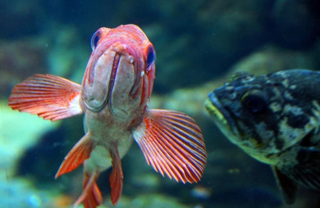 steinhart-aquarium