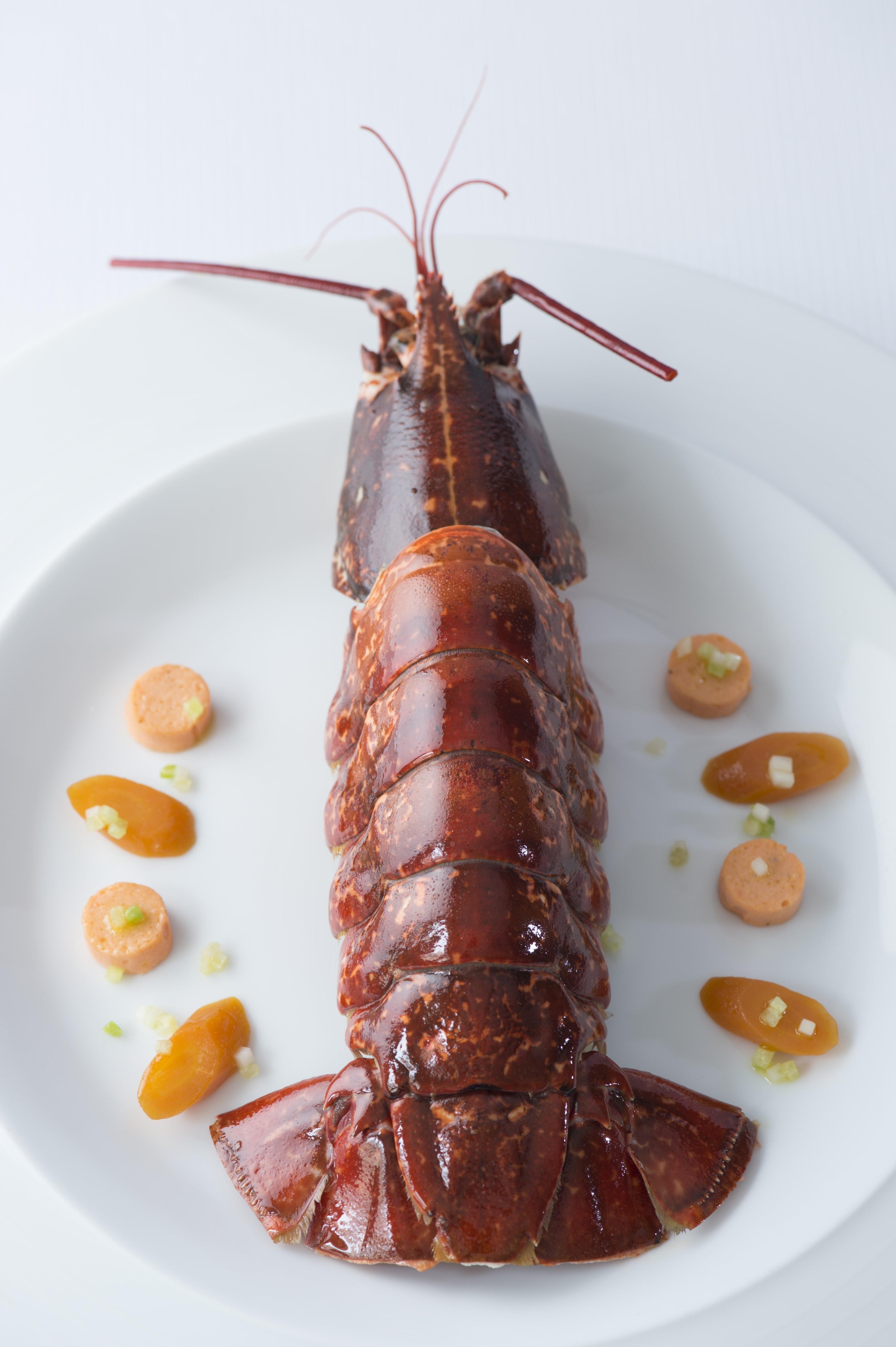 Surprise de homard 1 ©Laurence Mouton-min