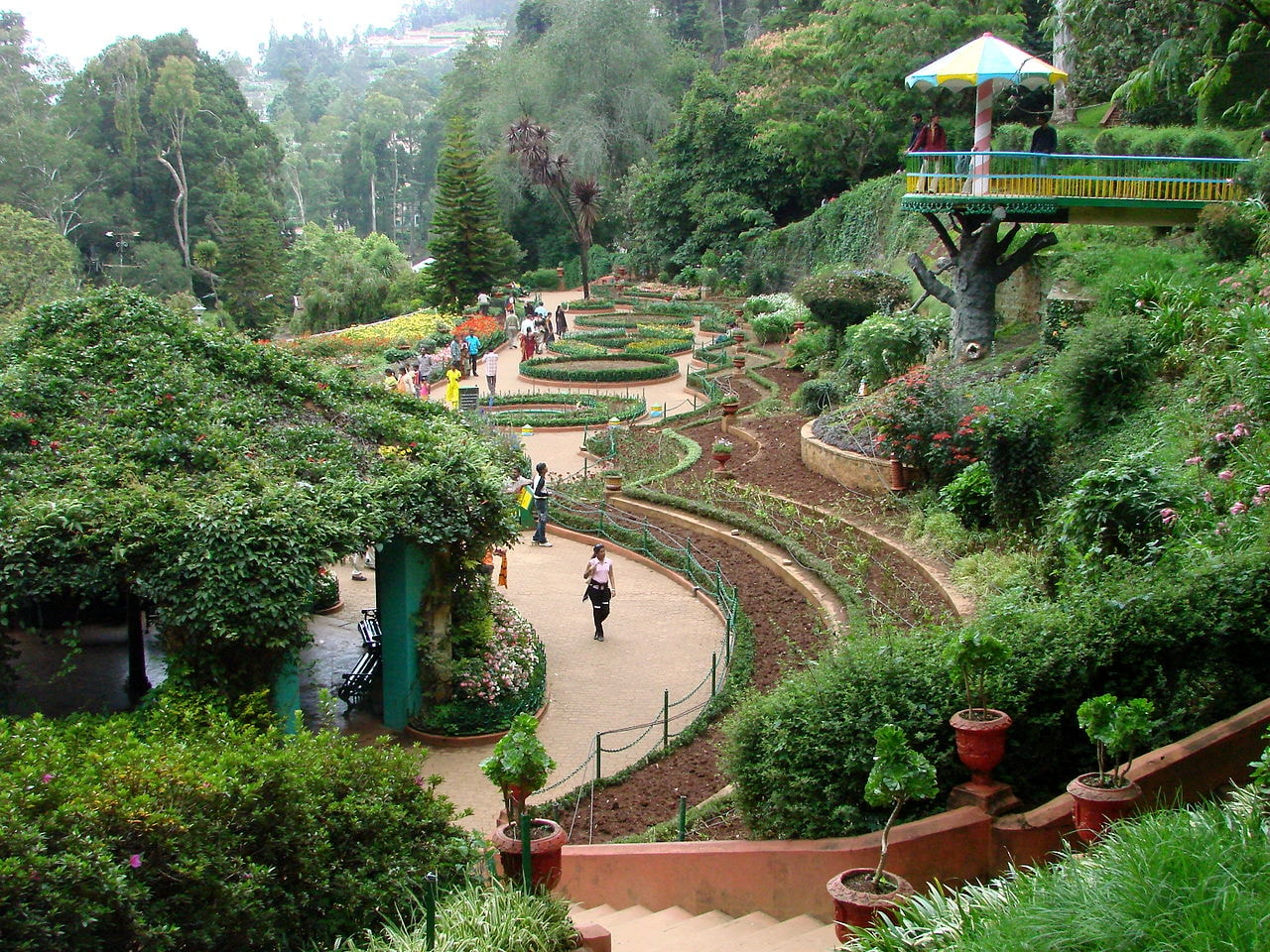1280px-Botanical_Gardens_-_Ootacamund_(Ooty)_-_India_03