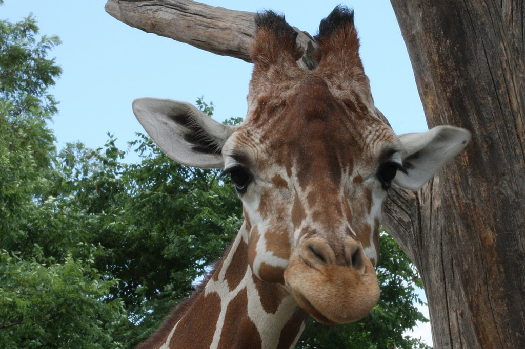 Indianapolis Zoo   © Rob Annis/Flickr