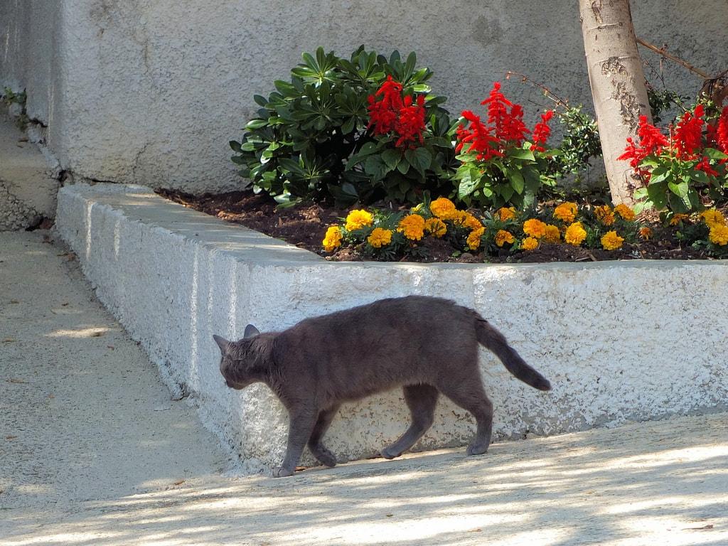 Doće maca na vratanca   © Keith Roper/Flickr
