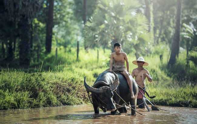 buffalo-1807517_1920