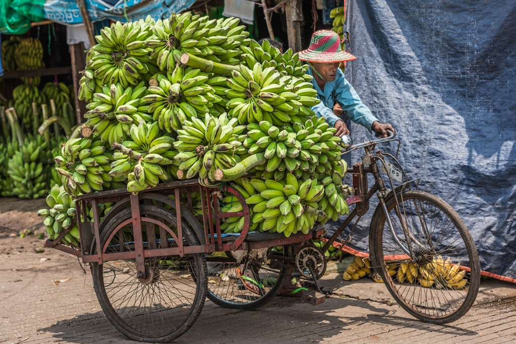 Bunches-of-Bananas-in-a-Trishaw-Yangon