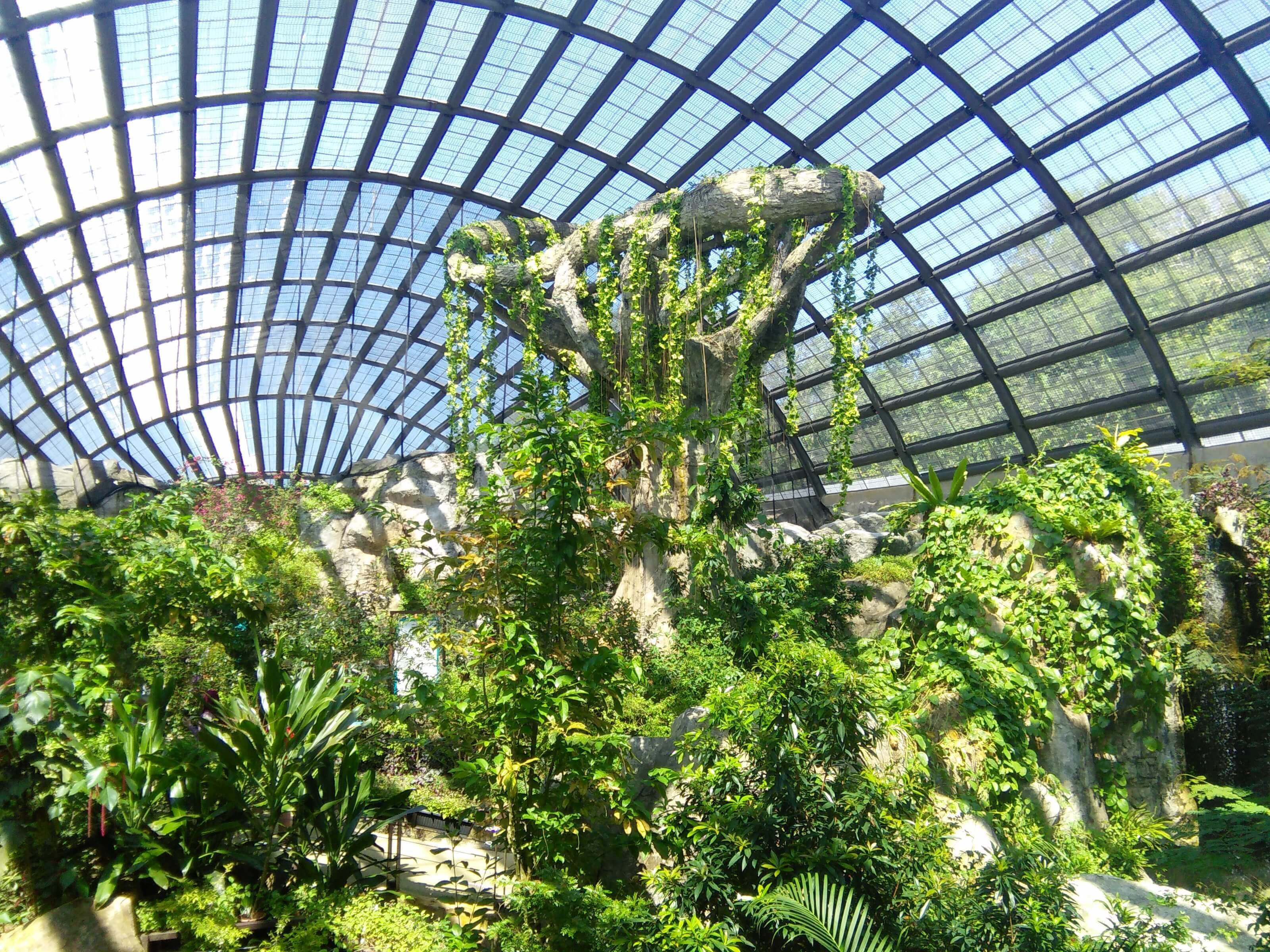 Culture Trip How to Spend 48 Hours in Penang Malaysia - Butterfly Farm Entopia