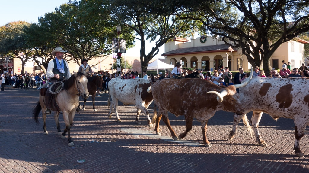 Fort Worth Stock Yards Cattle Drive