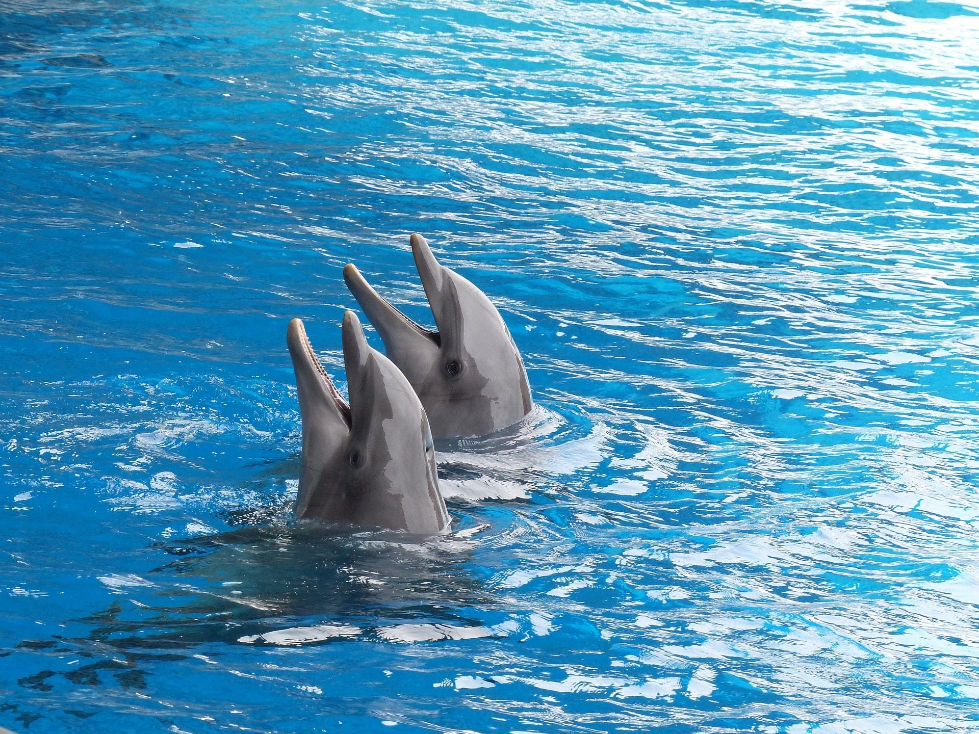 dolphin-2687078_1920
