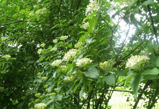 Dulovina_Botanical_Garden