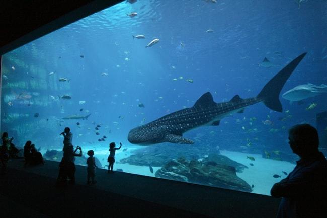Ga Aquarium:Flickr