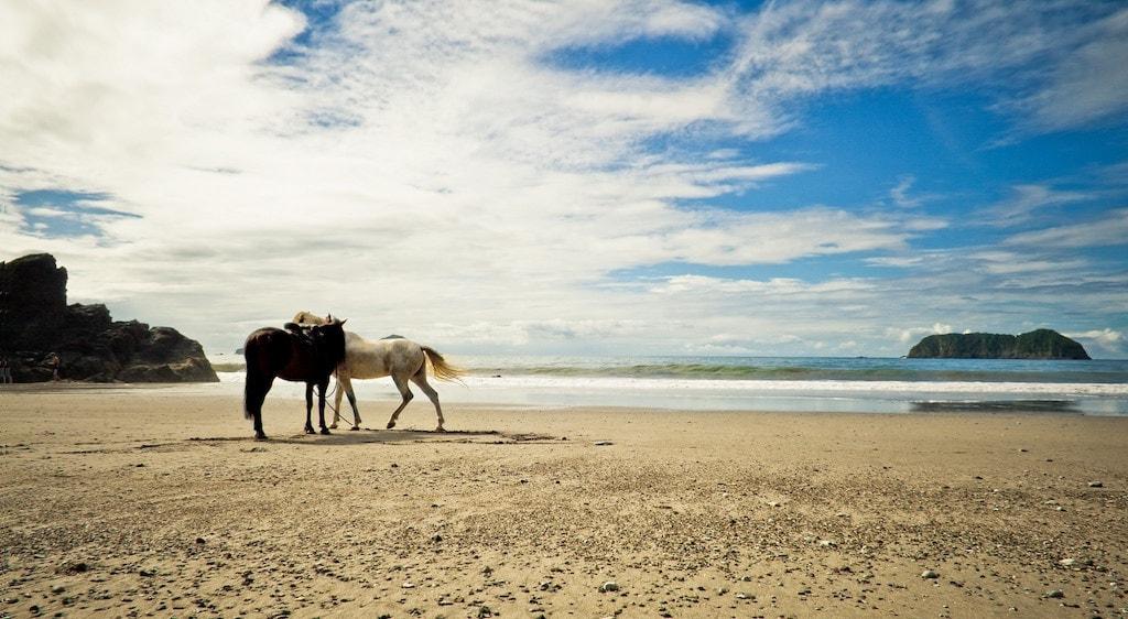 horse4_Fotor