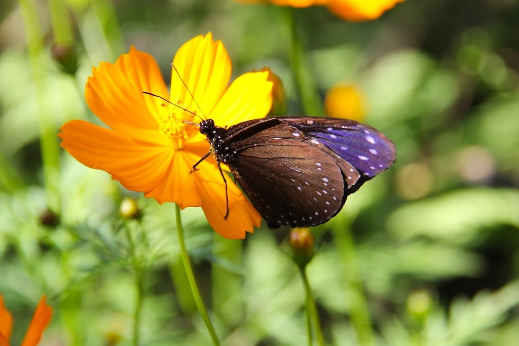 Luan Prabang Butterfly Garden | © sharonang/Pixabay
