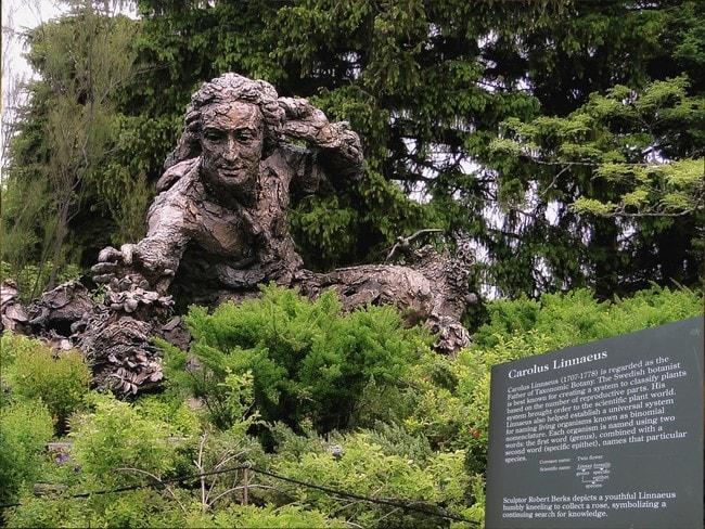 monument_character_the_statue_of_carolus_linnaeus_botany_sculpture_scientist_memory-871696.jpg!d