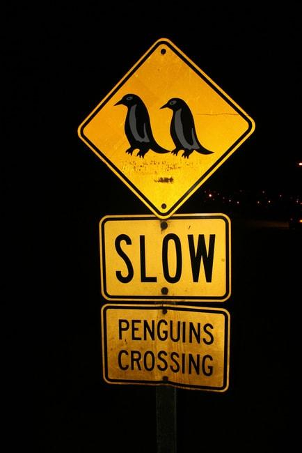 Oamaru Penguin Crossing