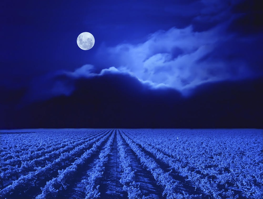 Moon over vineyard.
