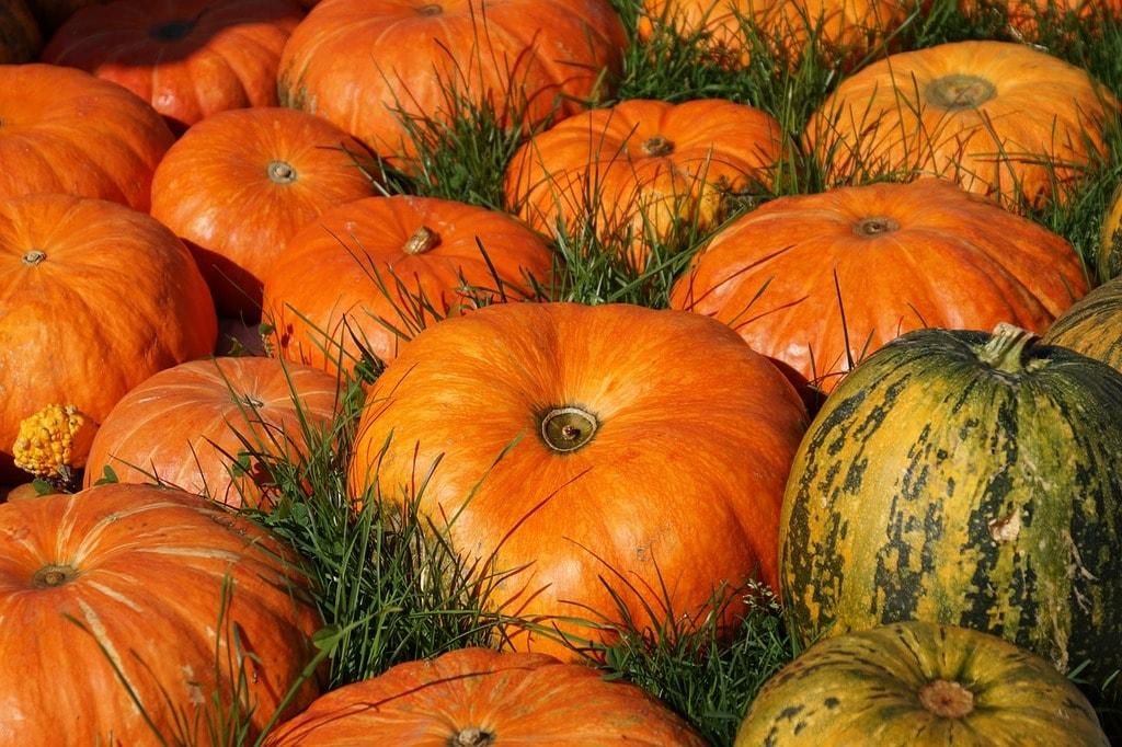 Pumpkin   ©suju/Pixabay