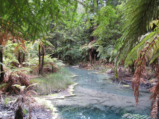 Roturoa Forest Walk