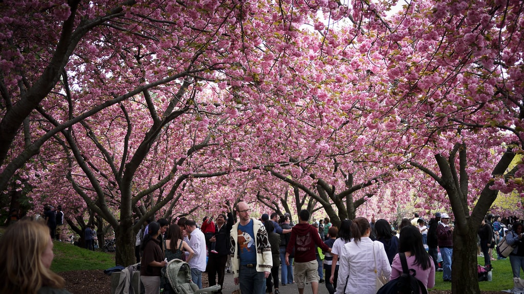 21 Things To Do In Spring In New York City
