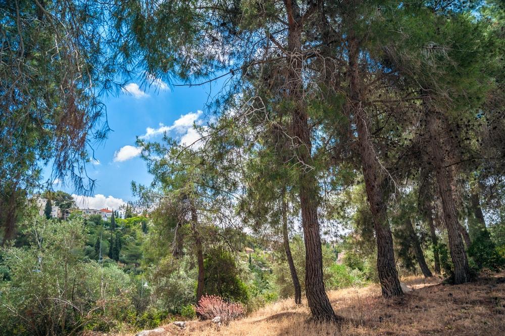 https://www.shutterstock.com/image-photo/landscape-gan-sacher-park-jerusalem-150530858?src=T6U8ig5V3UrOyhY4Jp1eHw-1-2
