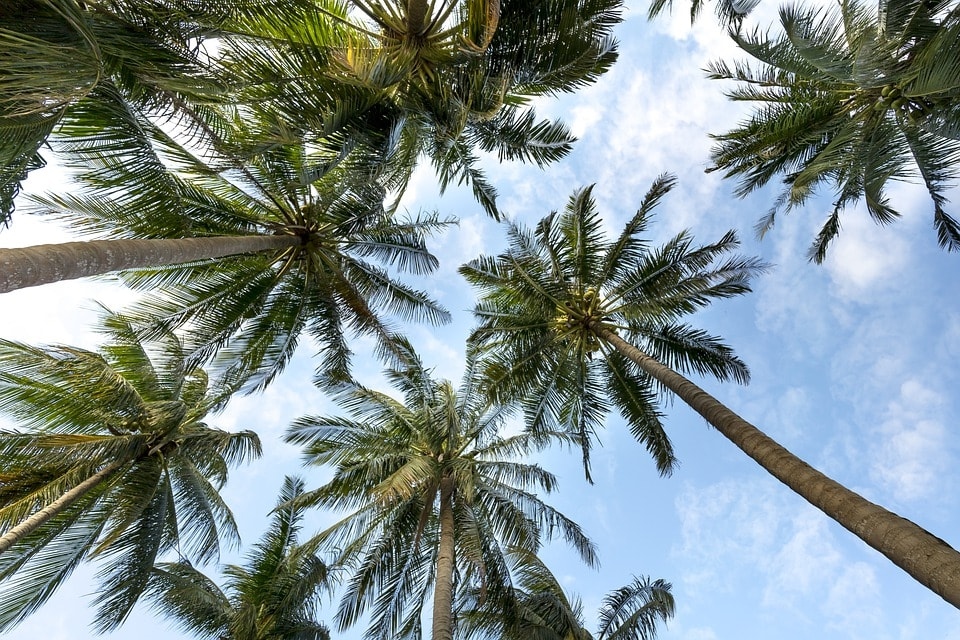 Sunny beach | Pixabay