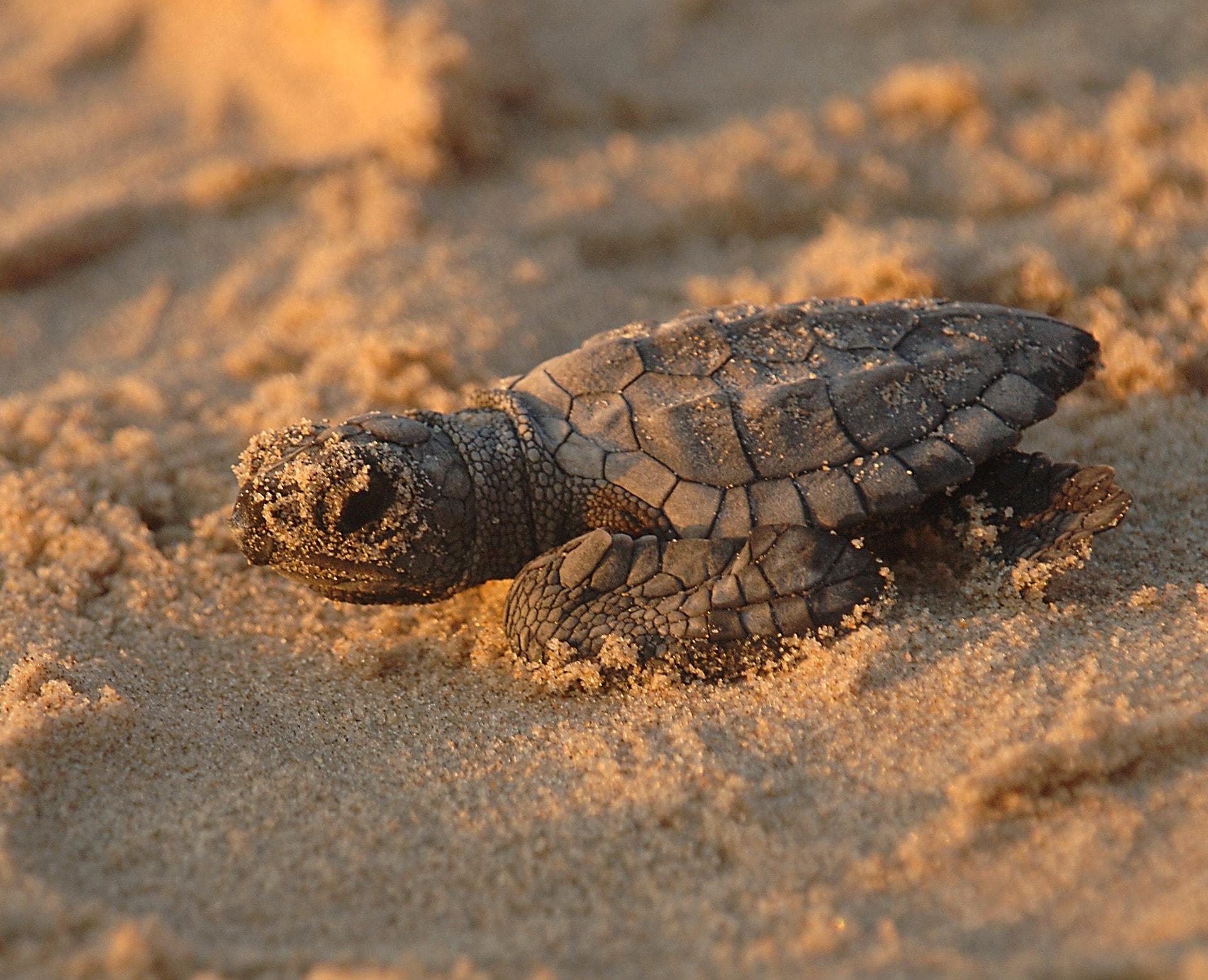 turtle-701663_1920