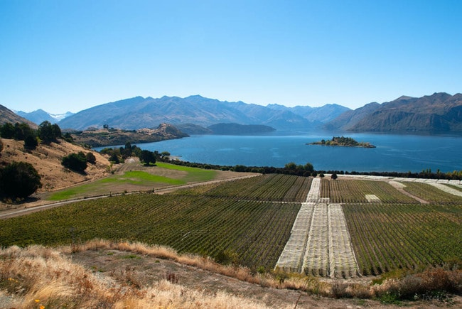 View Over Rippon Vineyard