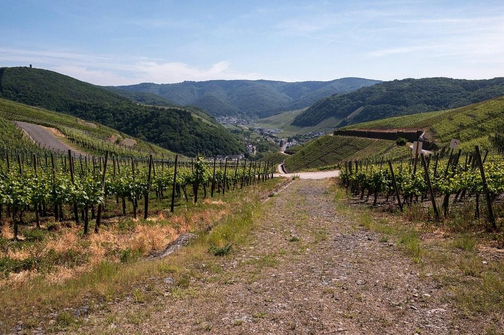 vines-801099_1280