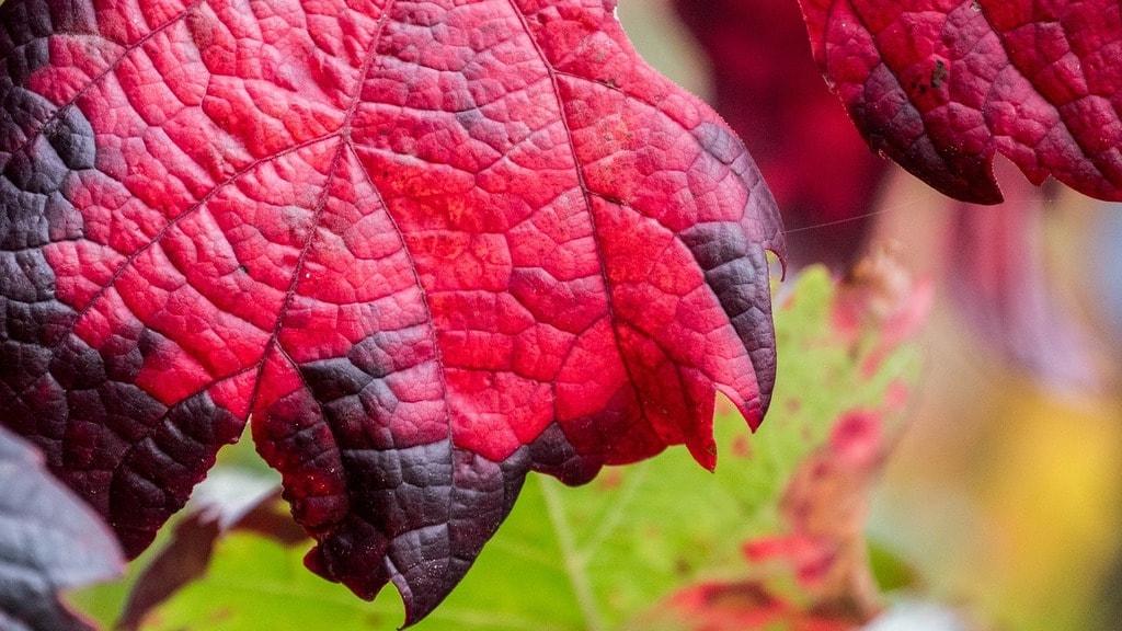 wine-2811490_1280