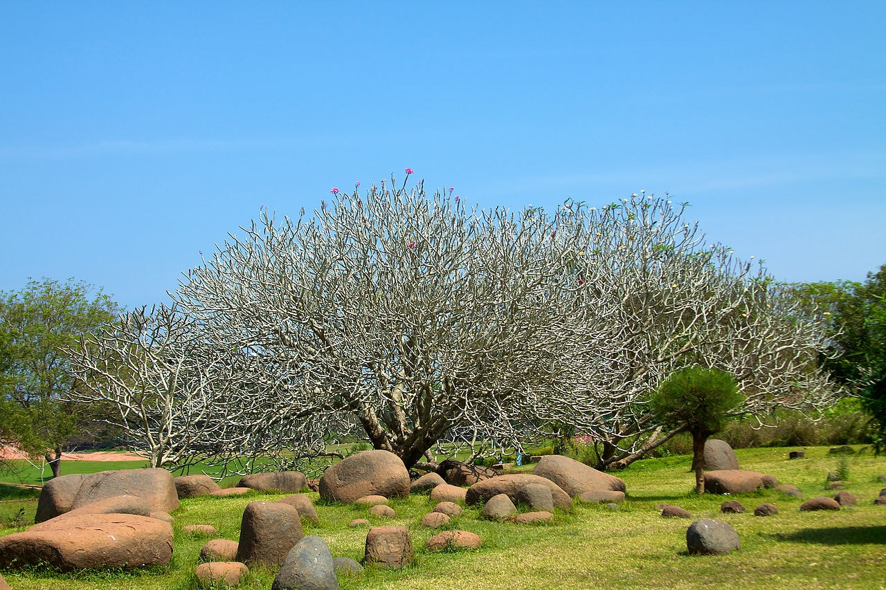 1280px-India_-_TN_-_11-01_-_Auroville_-_06_(5445461242)