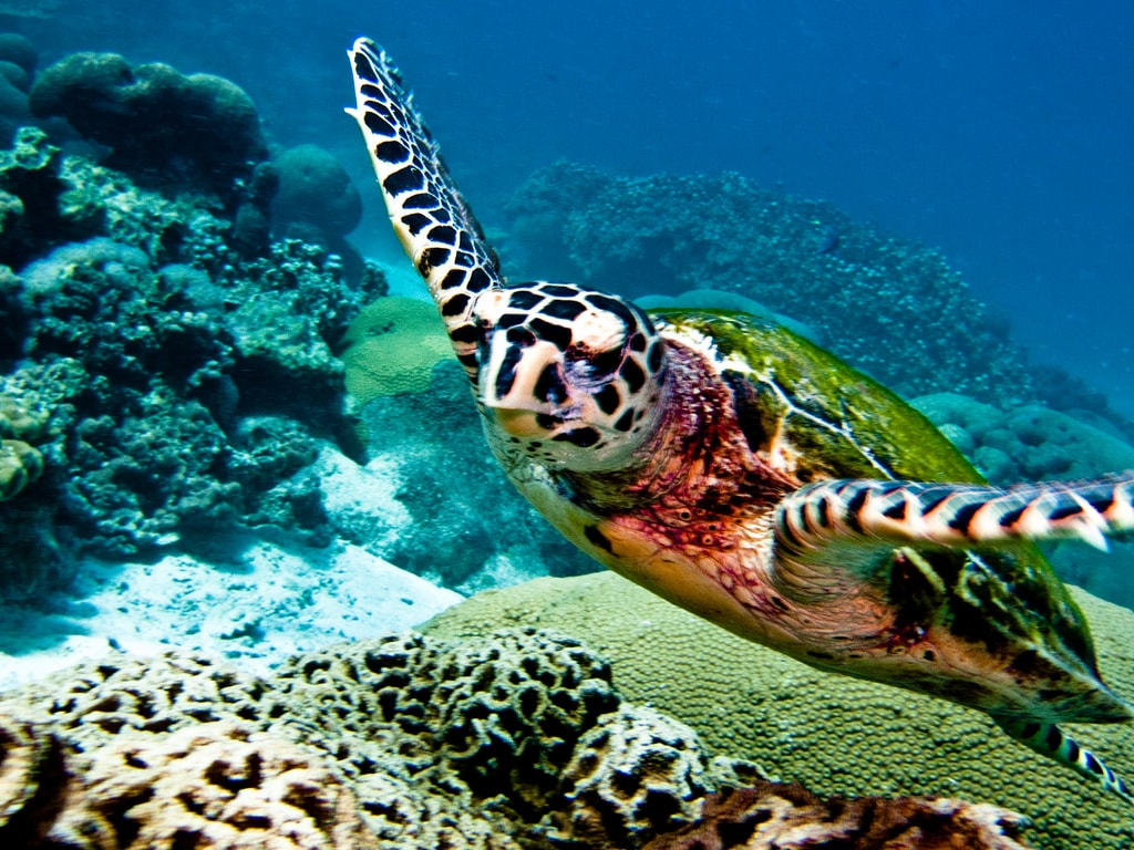 Thailand diving