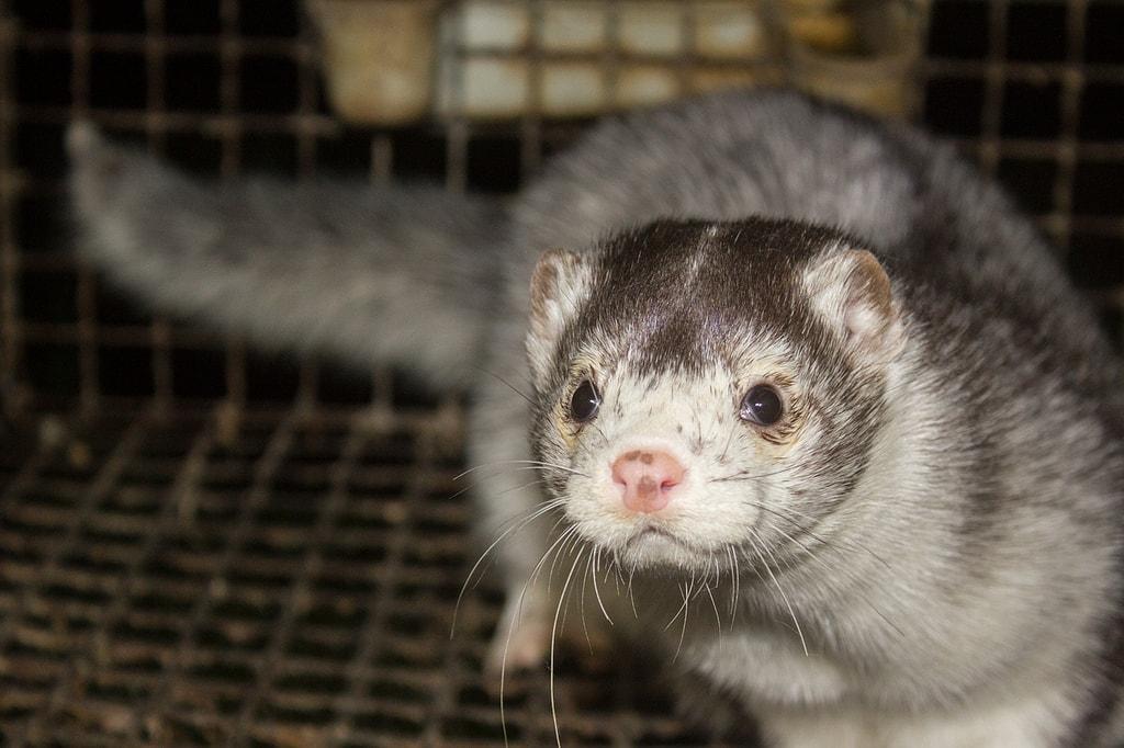Life at a mink fur farm | © Dzīvnieku brīvība/Flickr