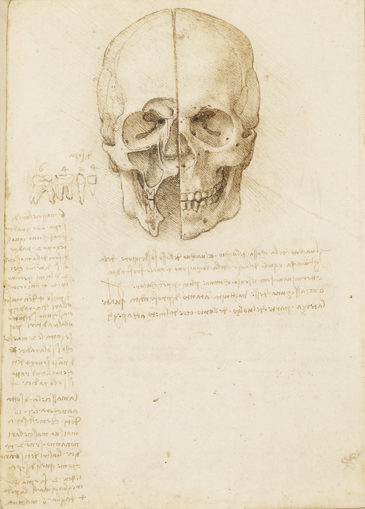 Leonardo da Vinci, The skull sectioned, 1489   Royal Collection Trust / © Her Majesty Queen Elizabeth II 2018