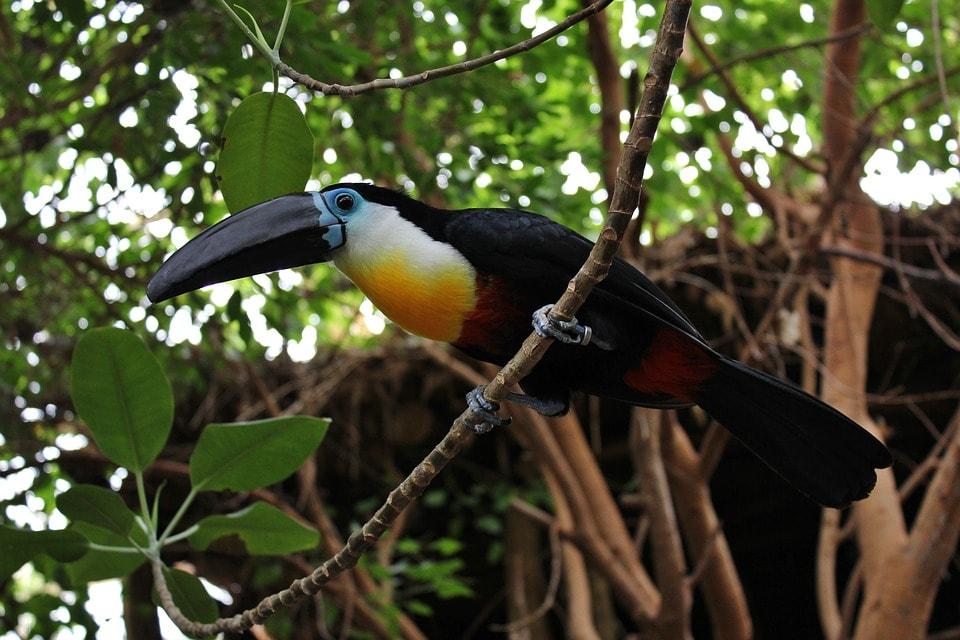 bird-1163410_960_720