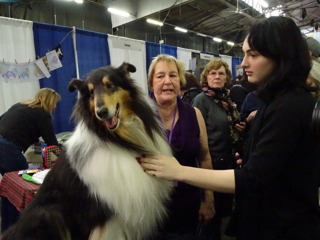 2018 Westminster Kennel Club Dog Show   © Michael LoRé/Culture Trip