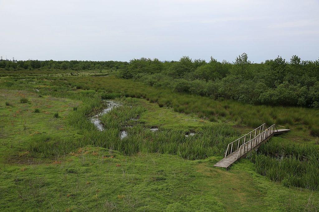 Kobuleti Nature Reserve