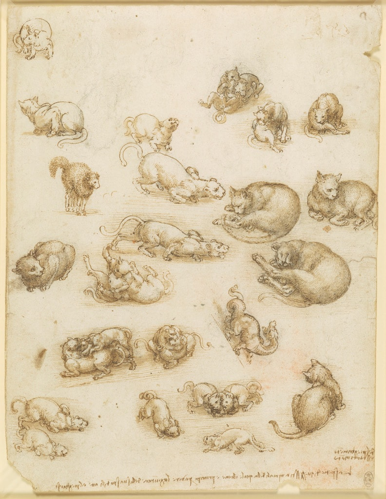 Leonardo da Vinci, Cats, lions and a dragon, c.1517–18  Royal Collection Trust / © Her Majesty Queen Elizabeth II 2018