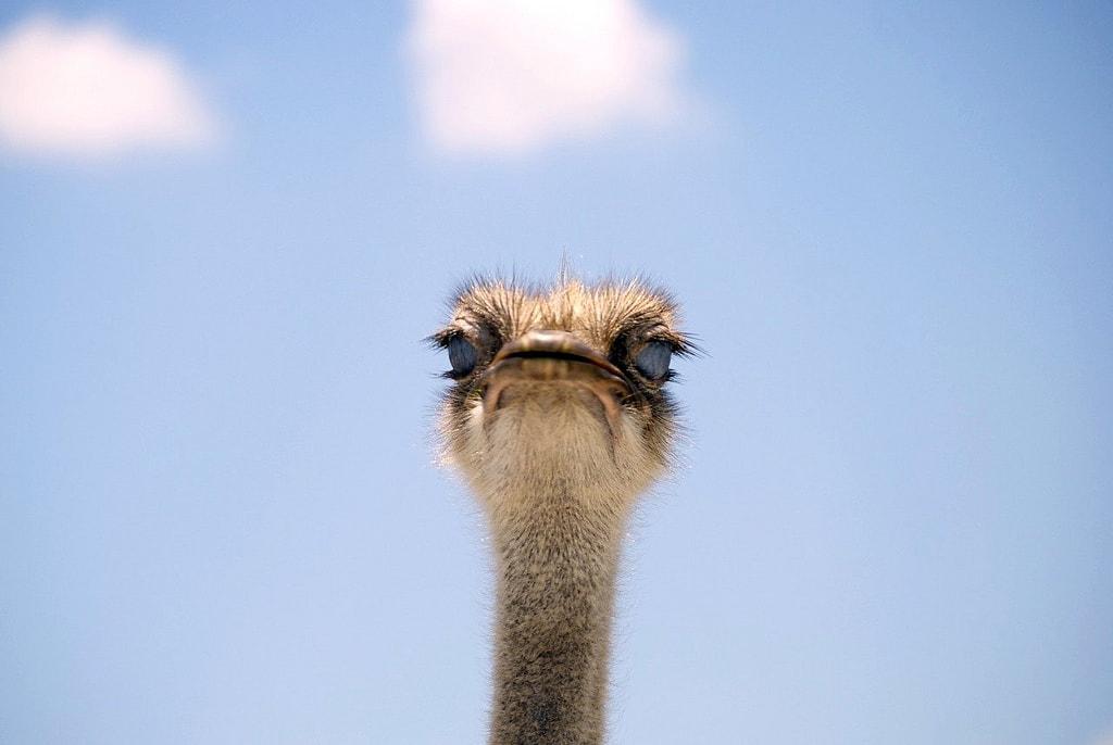 lion country safari ostrich