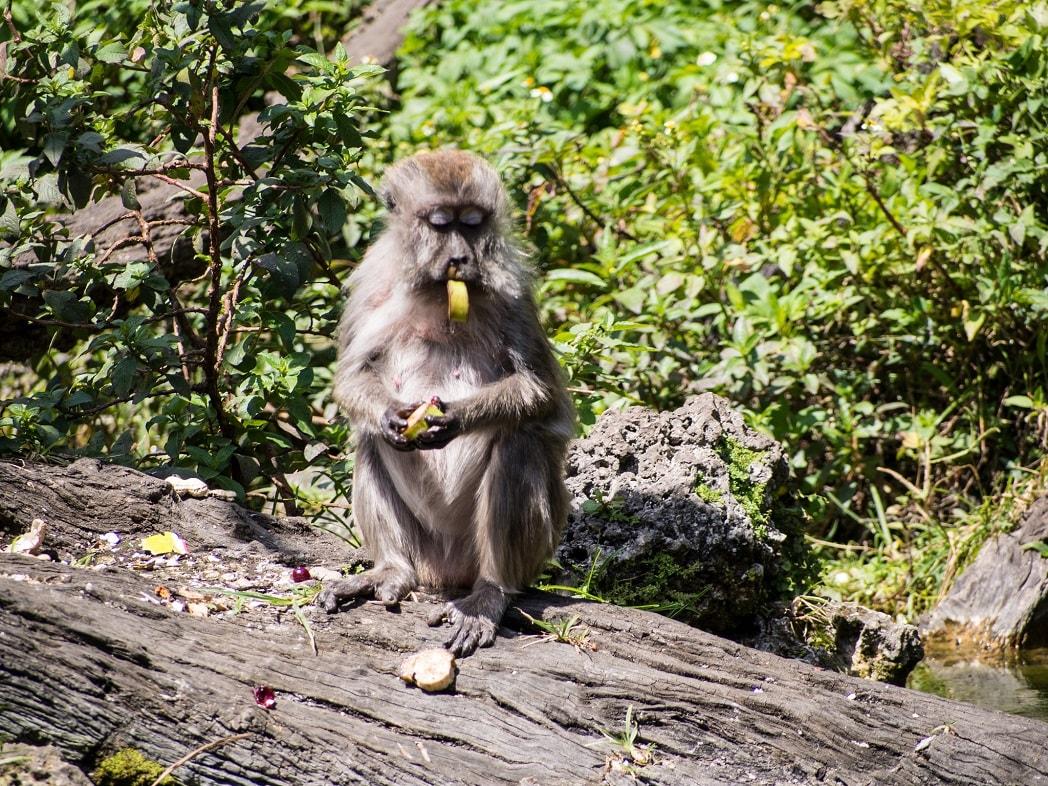monkey at monkey jungle