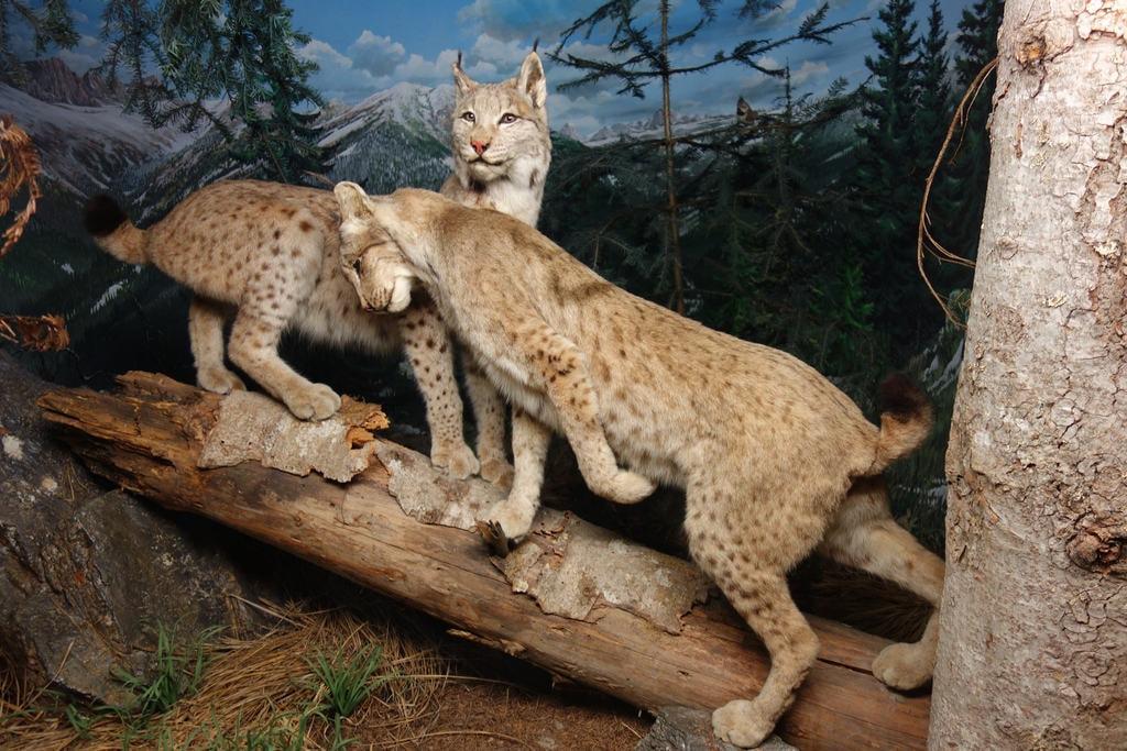 Zoology display Museo Civico di Storia Naturale di Milano | © Flickr/Wolf Gang