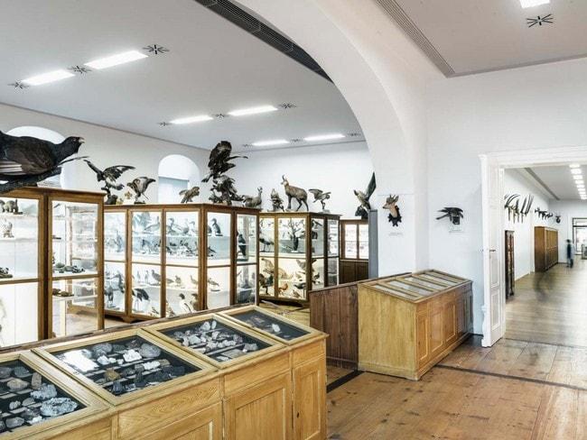 naturhistorisches_museum_1_20180110_1437524909