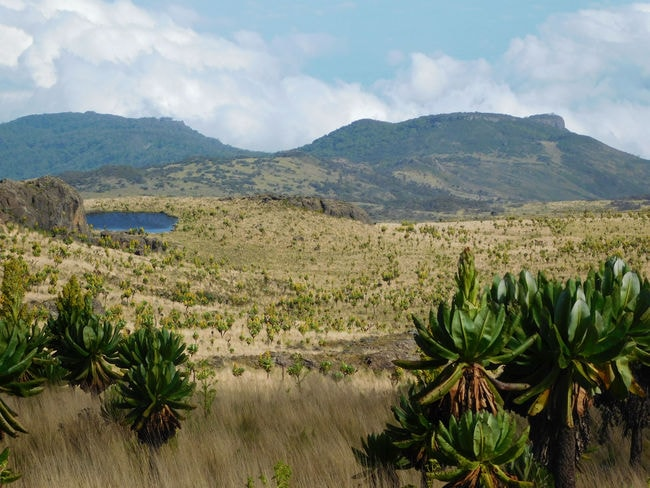 oleebranch.com-hiking-mt.elgon 3
