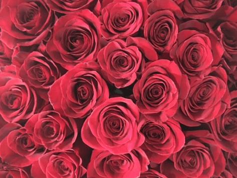 Rosa Rosa Florist