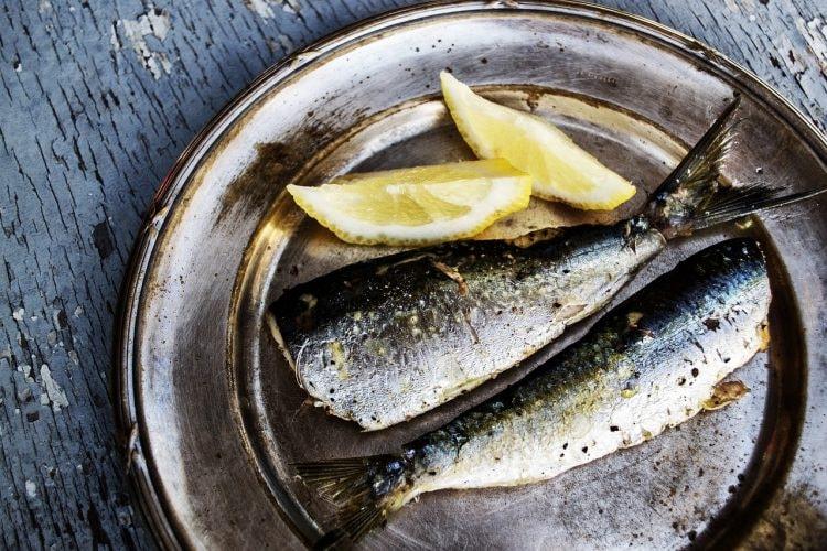 sardines-1489626_1280