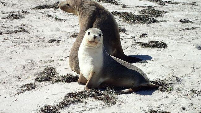Sea lions | © Su.fraser/Wikimedia Commons