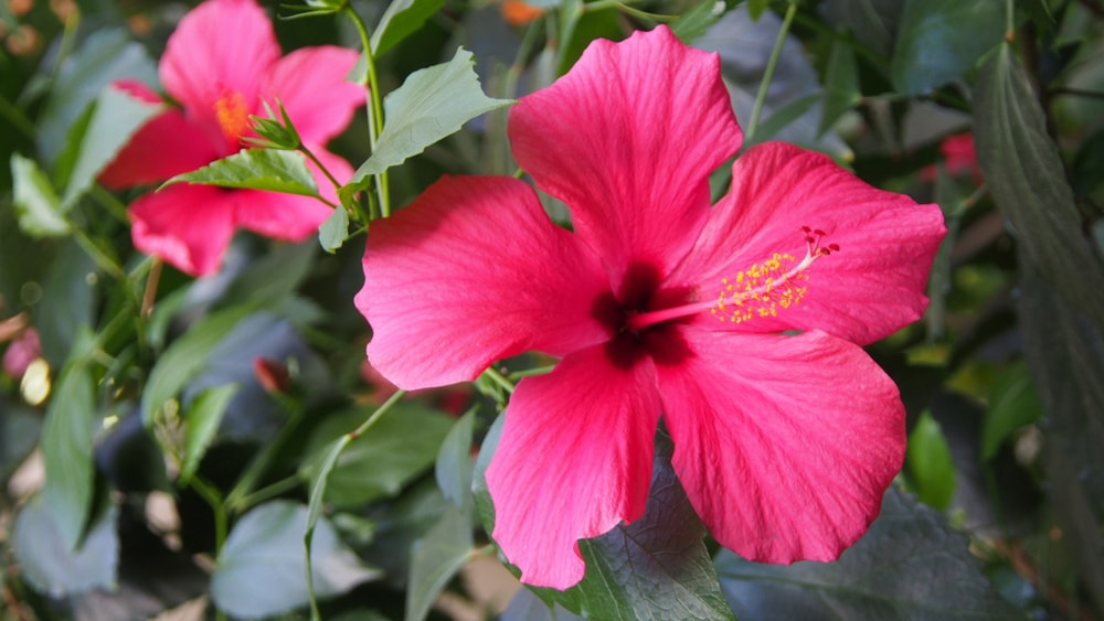 15 Beautiful Flowers And Plants Native To Malaysia