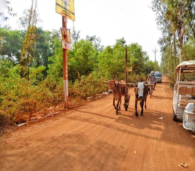 Sonajhuri 8- Dirt Road- 2015