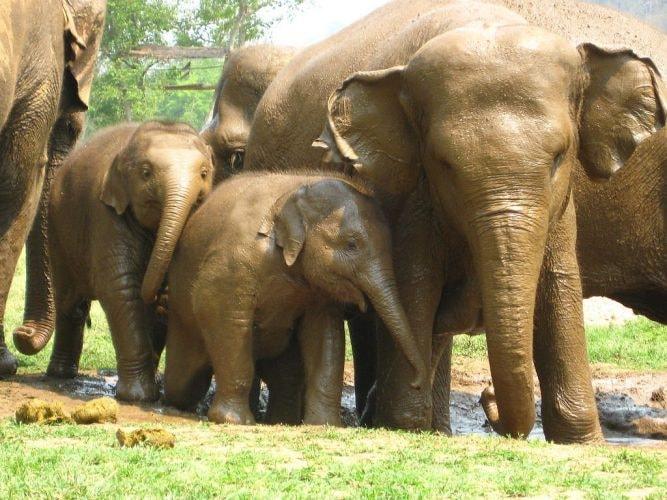 1024px-Elephant_Family